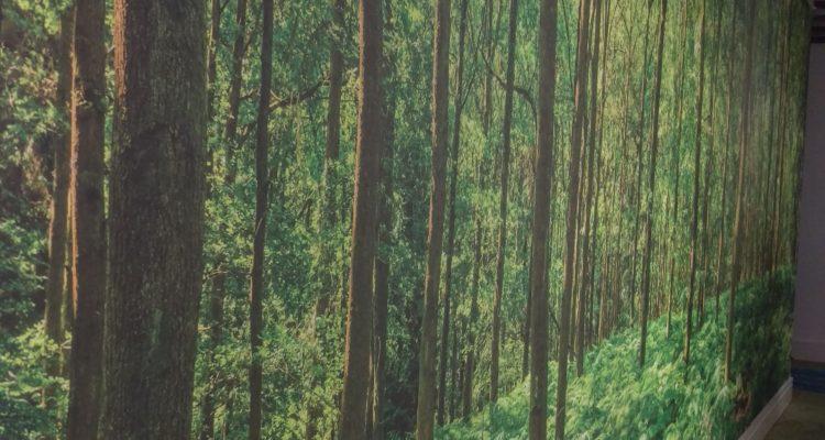 wallpaper-trees-halo